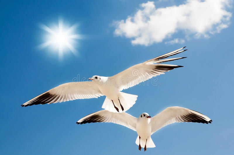 Two Seagulls Are Flying Royalty Free Stock Photography