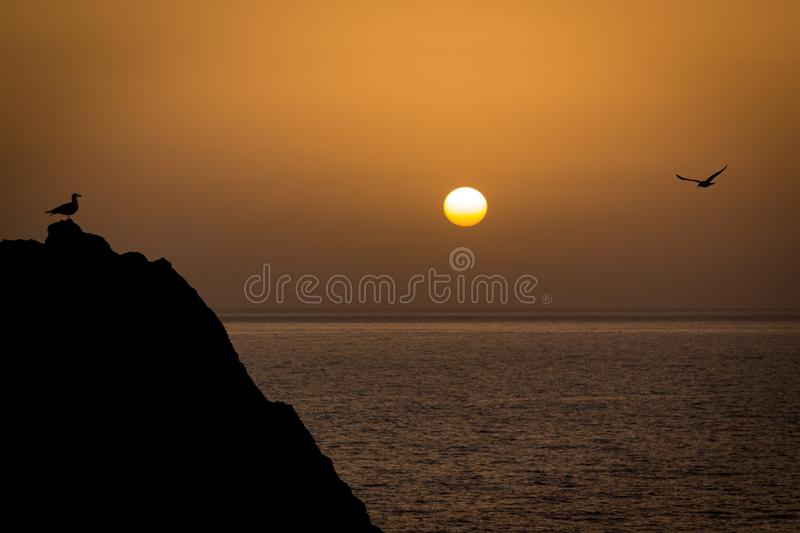 Two seagulls meeting in a rock in front of the sea while the sun is setting at the horizon stock images