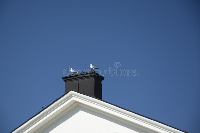 Two seagulls sitting on a chimney rooftop stock photos