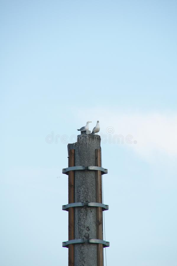 Birds on the broken mast royalty free stock image