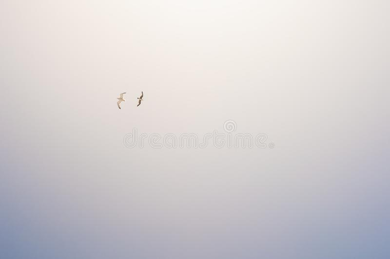 Two seagulls soaring in the sky. Beautiful nature background stock photos