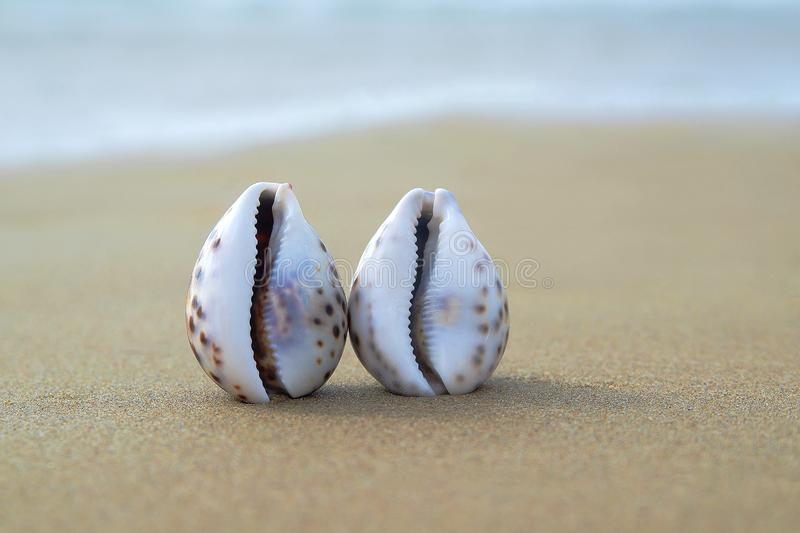 Two seashells in the sand as a concept of same-sex love.  stock images