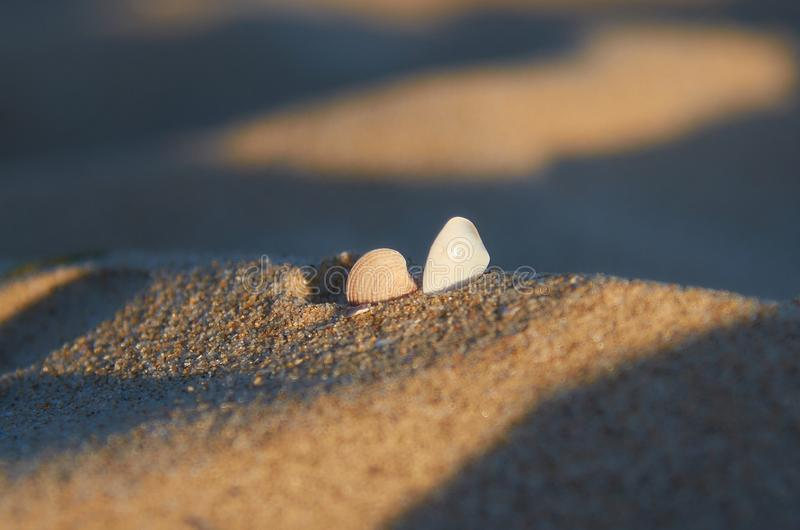 Seashells on a sandy beach stock images