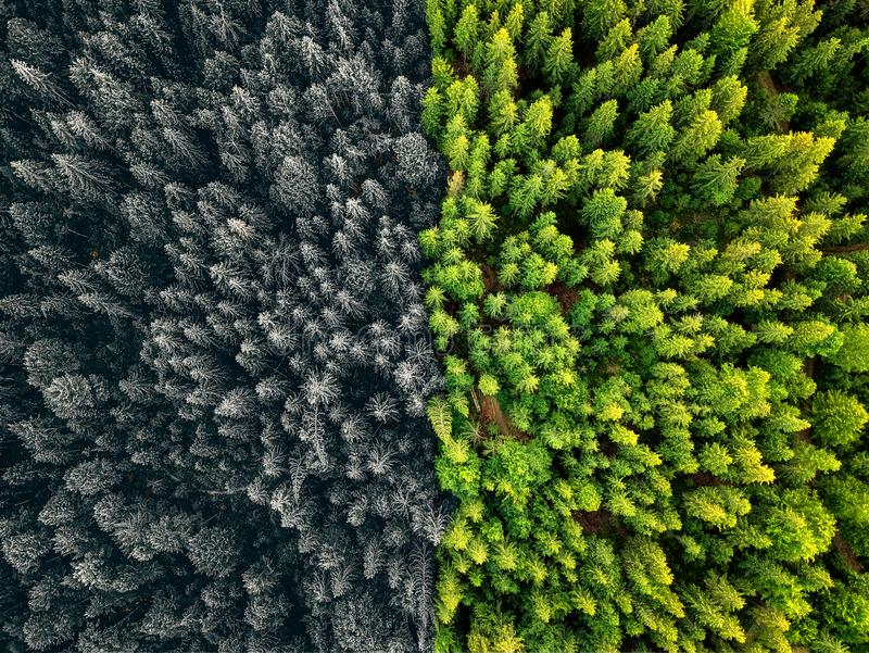 Two season colliding winter & summer forest aerial shot with trees sunlight. Two seasons colliding winter & summer forest aerial shot with trees sunlight royalty free stock image