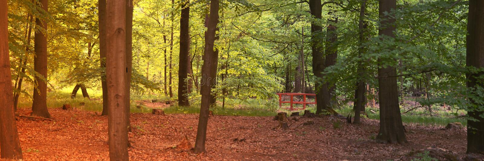Two seasons in the forest, summer and autumn. Panoramic landscape shot stock photo