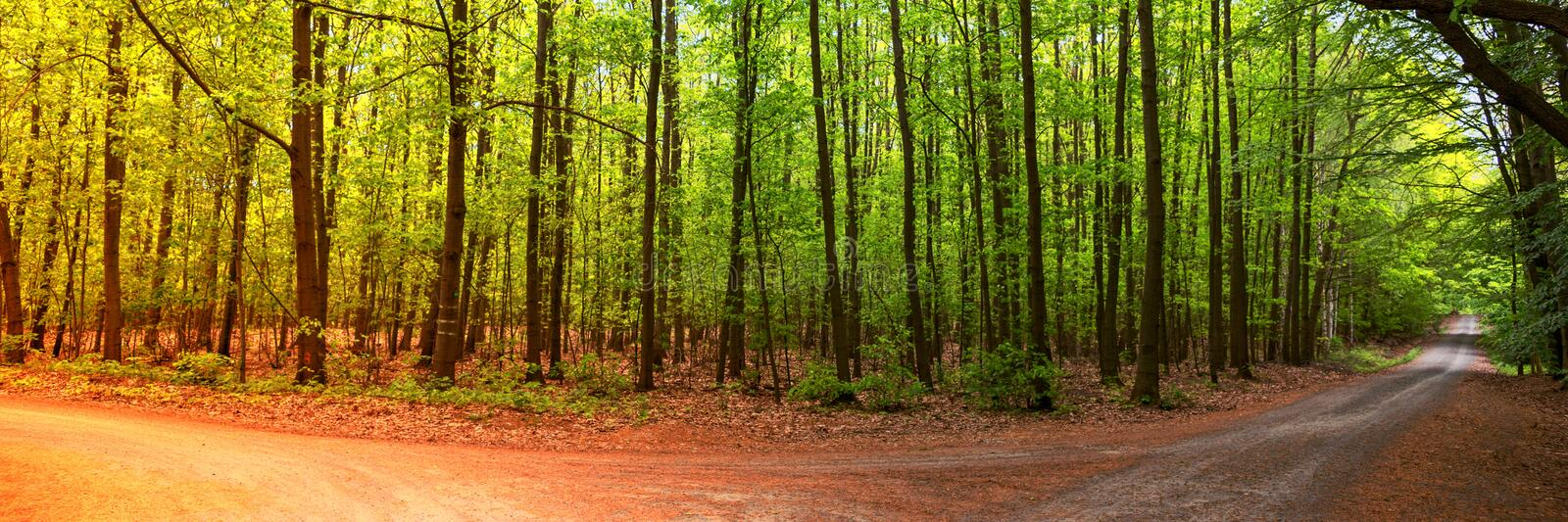 Two seasons in the forest, summer and autumn. Panoramic landscape shot stock photography