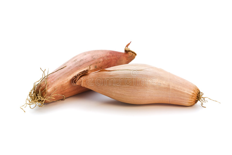 Two shallots isolated stock images