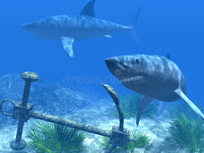 Two sharks in the Caribbean waters stock photography