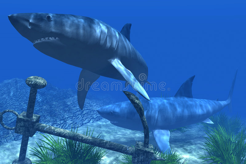 Download Two Sharks In The Caribbean Waters Stock Illustration - Image: 5506857