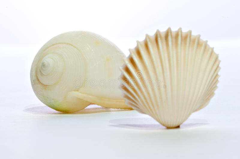 Two shell 02. (before, and latter) two different shell distinctions royalty free stock image