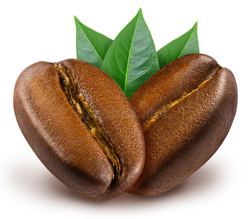 Two shiny fresh roasted coffee beans with leaves. royalty free stock photo