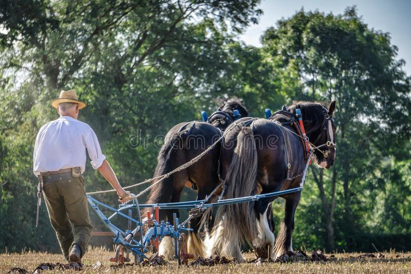 Two Shire Horses ploughing a field royalty free stock photos