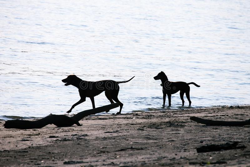 Two Silhouettes of dog stock photo
