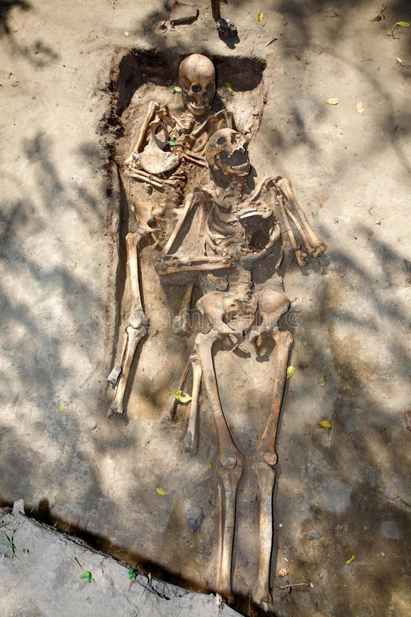 Free Two Skeleton. Archeology Stock Photos - 66263583