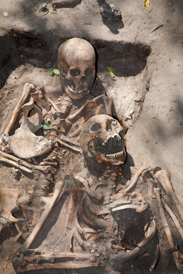 Free Two Skeleton. Archeology Stock Image - 66263611