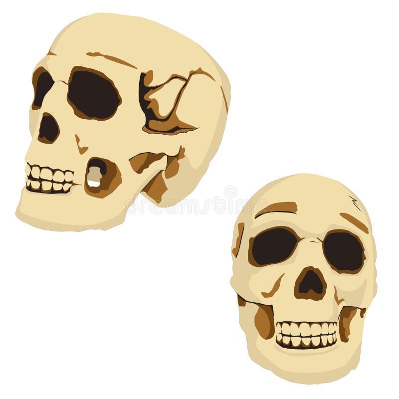 Two skulls royalty free stock photos