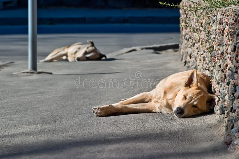 Two sleeping homeless dogs stock image