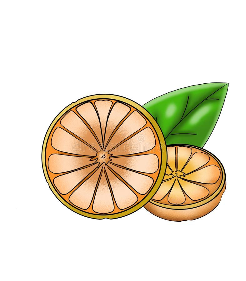 Two sliced along the orange. Two fresh oranges cut into halves lie with a leaf of mint vector illustration