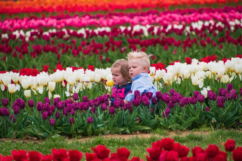 Two small children with unhappy faces are forced to pose for pictures sitting in a field of multicolored tulips stock images