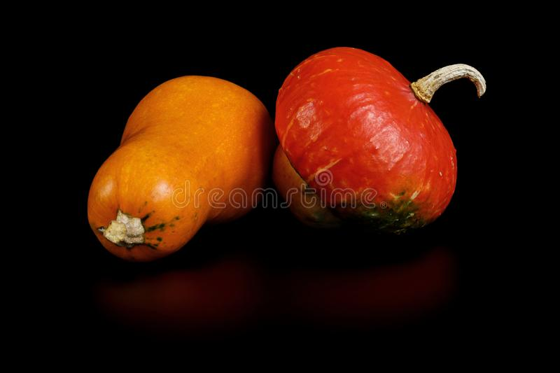Two small decorative pumpkins look bright and unusual. Used in gardening to decorate the site. Isolated on black. Background for Halloween design stock images