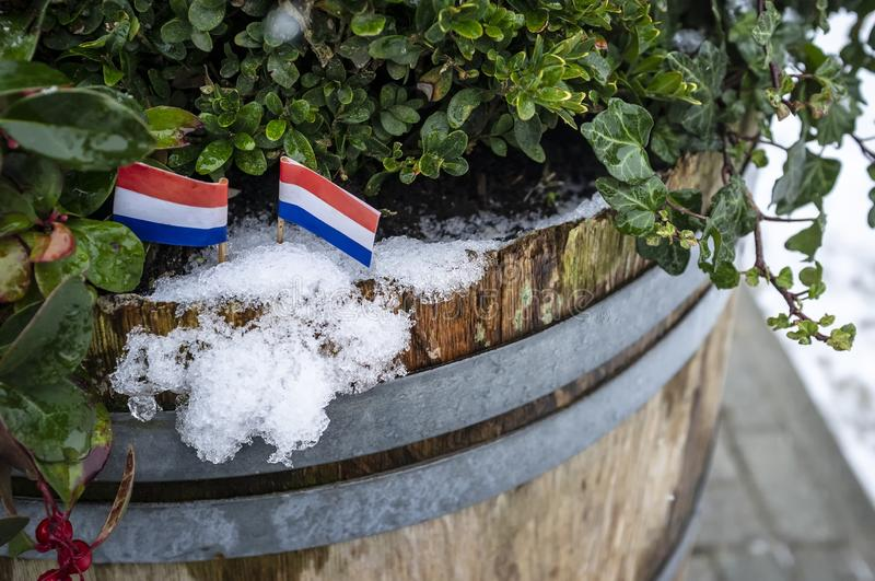 Two small flags of the Netherlands are set in the snow, in an old wooden barrel with green plants. Close-up royalty free stock photos