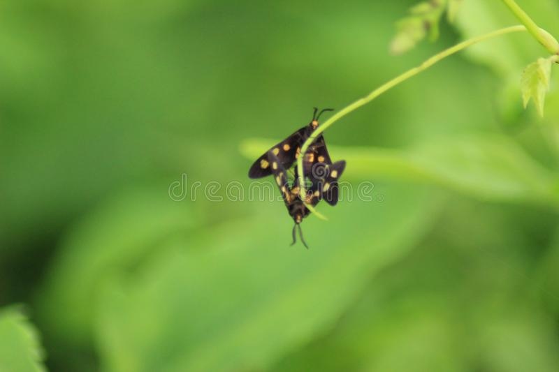 Two small insect in a plant royalty free stock photography