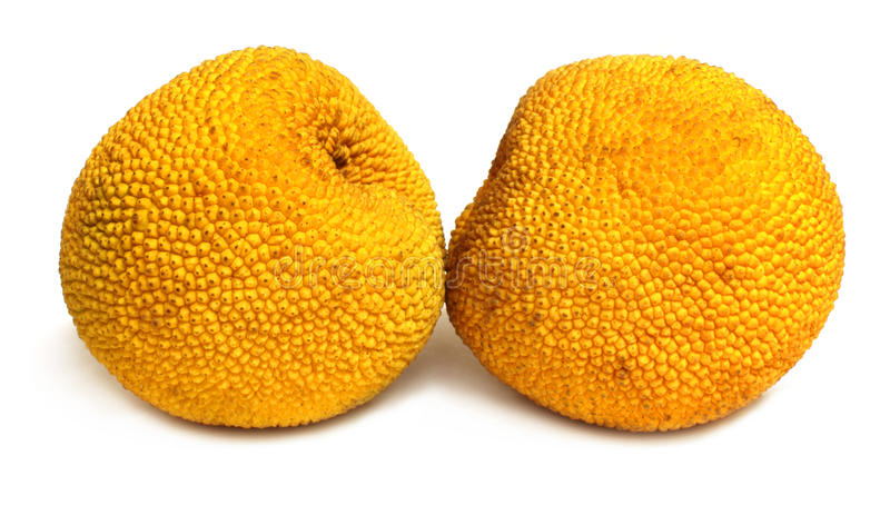 Two Small Jackfruits Stock Photos