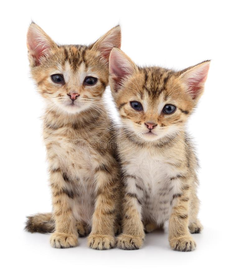 Two small kittens. Two small kittens on white background royalty free stock photo