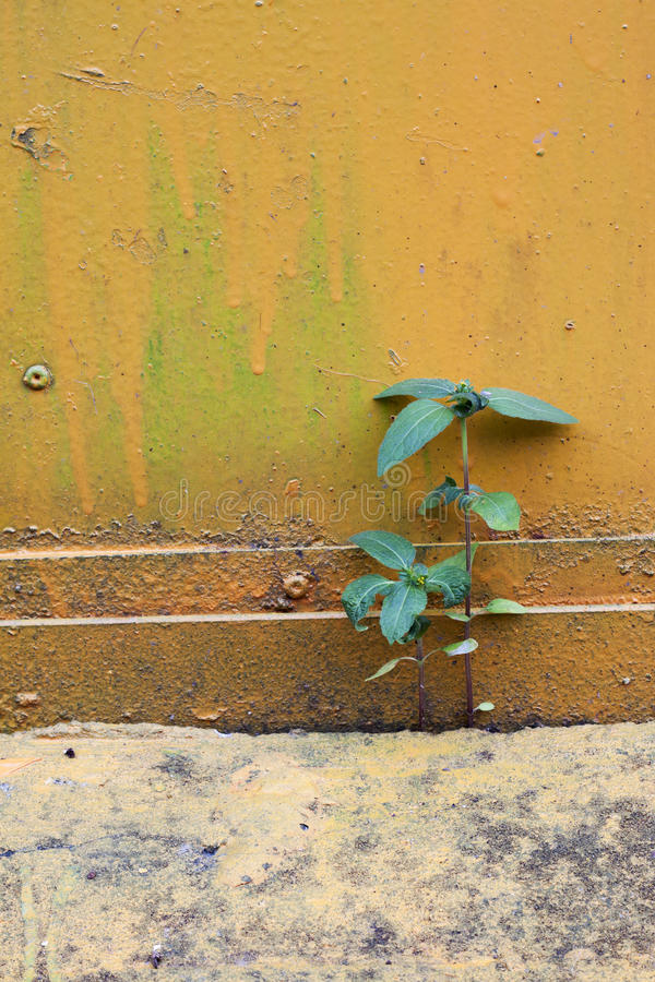 Free Two Small Palnt Grow On Cement S Gap Stock Photo - 27333850