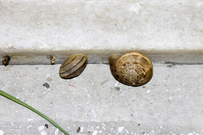 Two small snails on a stone step stock photo