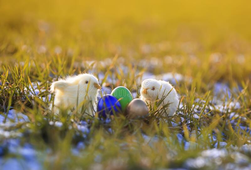 Two small yellow chicken toy in the grass next to multi-colored eggs in the garden snow spring Sunny meadow. Easter card with two small yellow chicken toy in the stock images