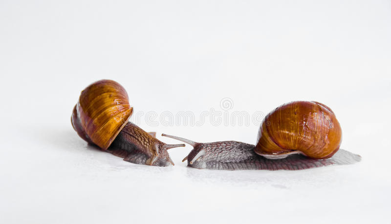 Download Two snails stock image. Image of issues, white, friendship - 10398515