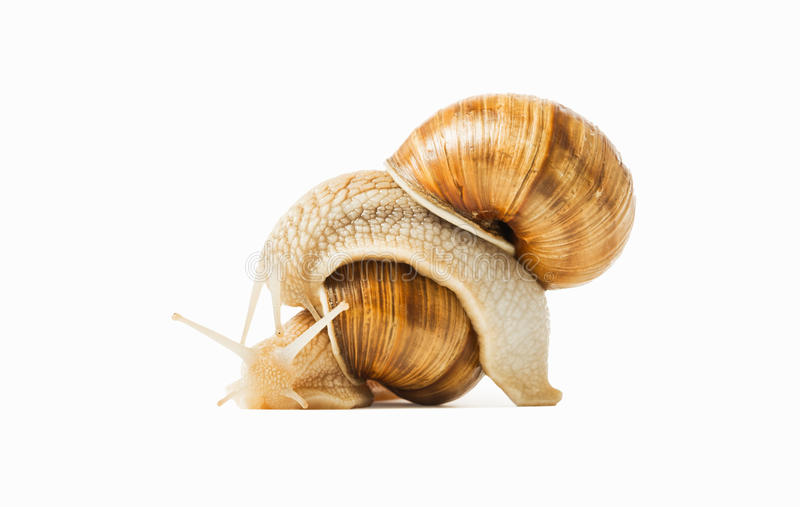 Two snails. Drawn to each other isolated on a white background. The concept of love, feelings, attitudes stock photography