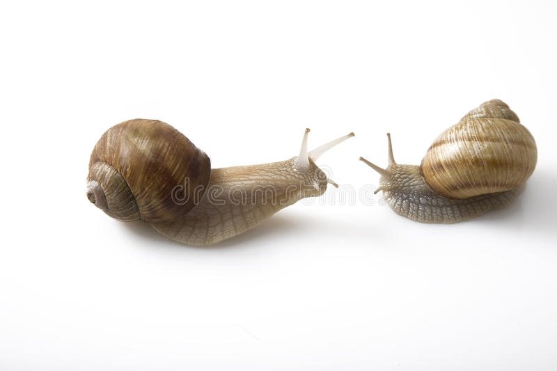 Download Two Snails Face To Face, Communication Concept Royalty Free Stock Images - Image: 14910919