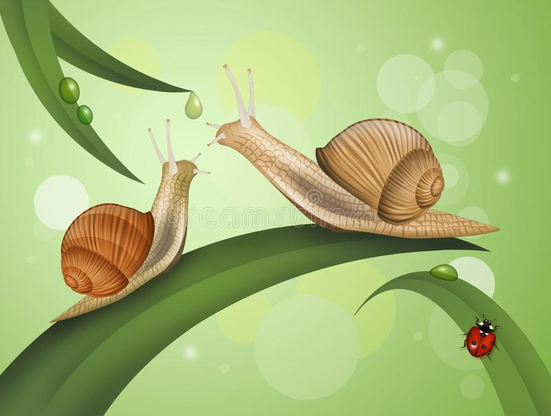 Two snails on the leaves. Illustration of two snails on the leaves stock illustration