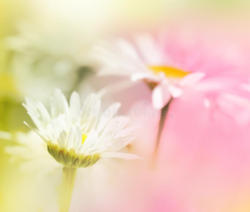 Two soft focus flowers in pink and green. stock image