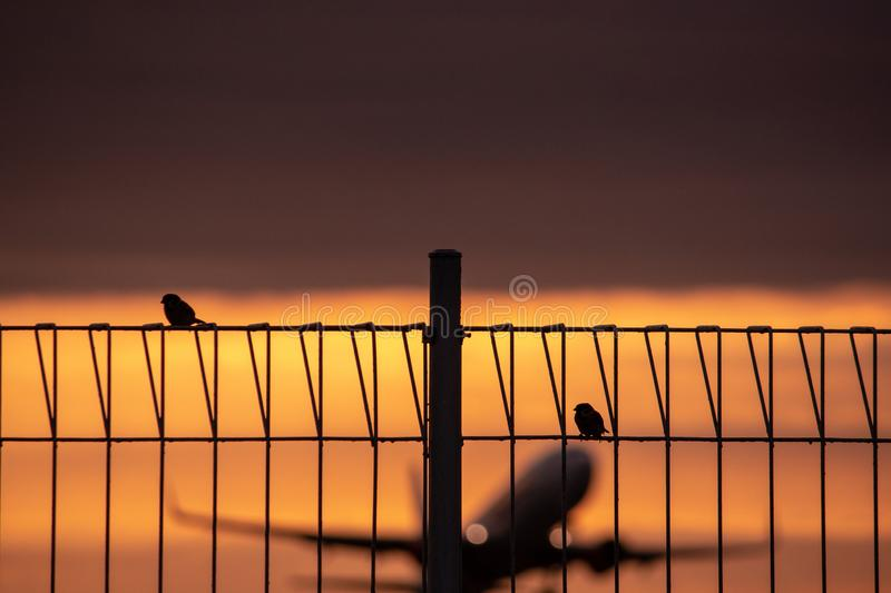 Two sparrows are perched on an iron fence with a plane blur background taking off at dusk warm and orange stock image