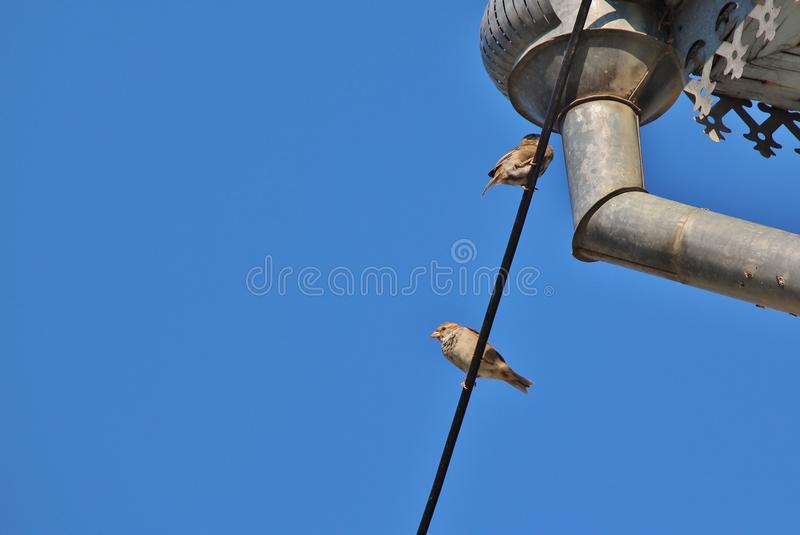 Two sparrows on thick wire stock images