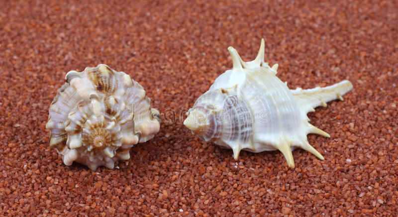 Two Spiral Shells On Coarse Sand Stock Image