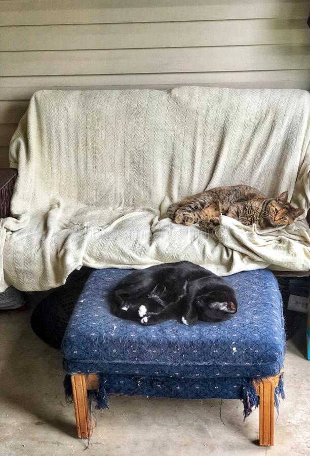 Two spoiled domestic cats napping on patio furniture. Two spoiled domestic cats nap on patio furniture during an afternoon royalty free stock photos