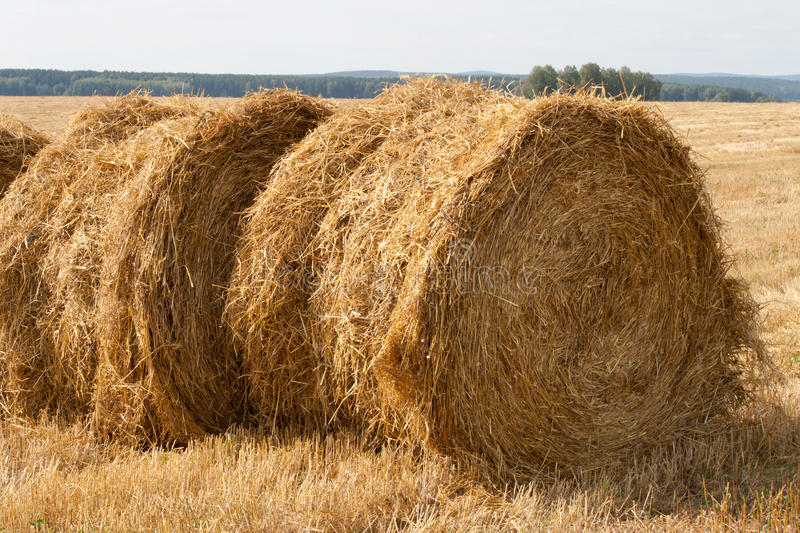 Two stacks of hay stock image