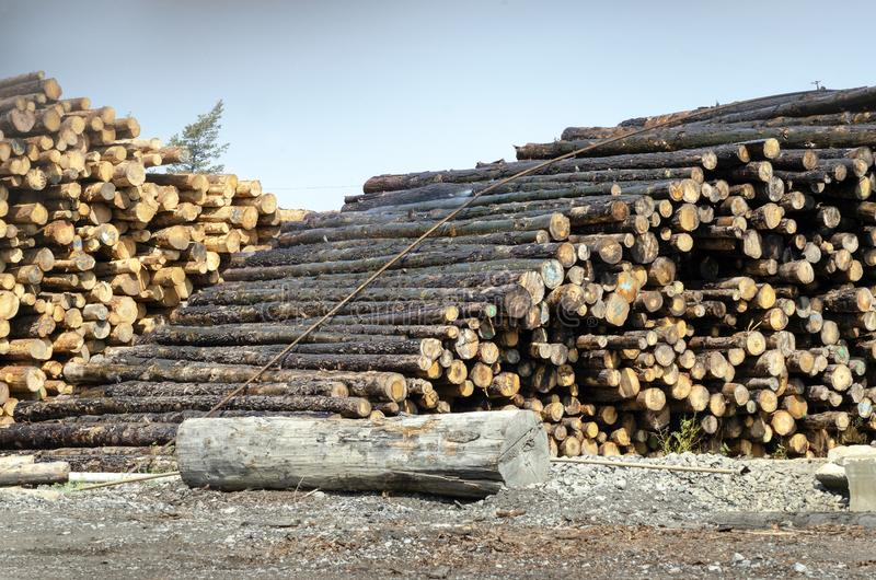 Two Stacks of Trees - Lumber stock image