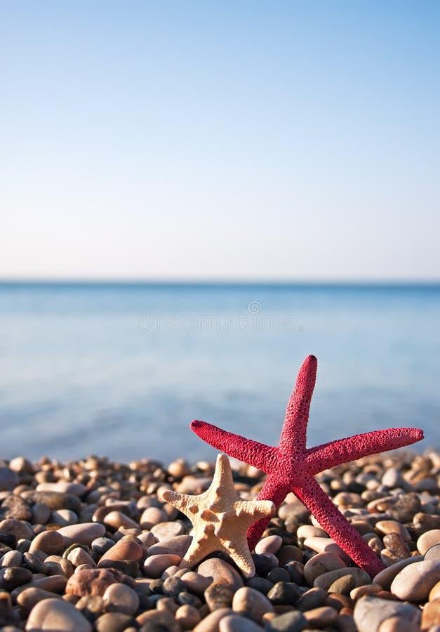 Two starfish stock photo
