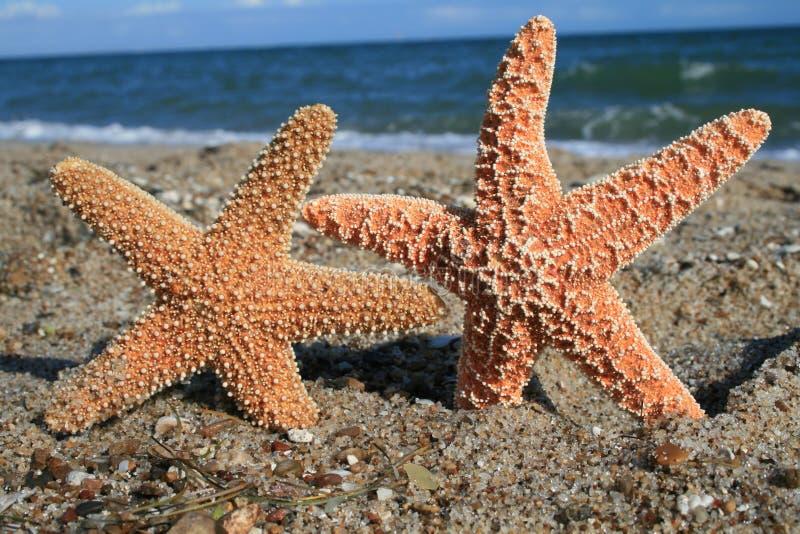 Two Starfish On Beach Stock Photos