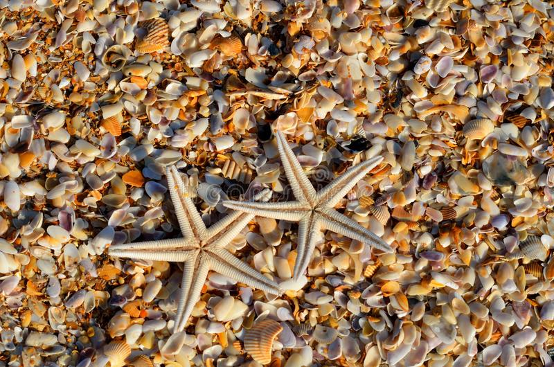 Two starfish on beach stock photography