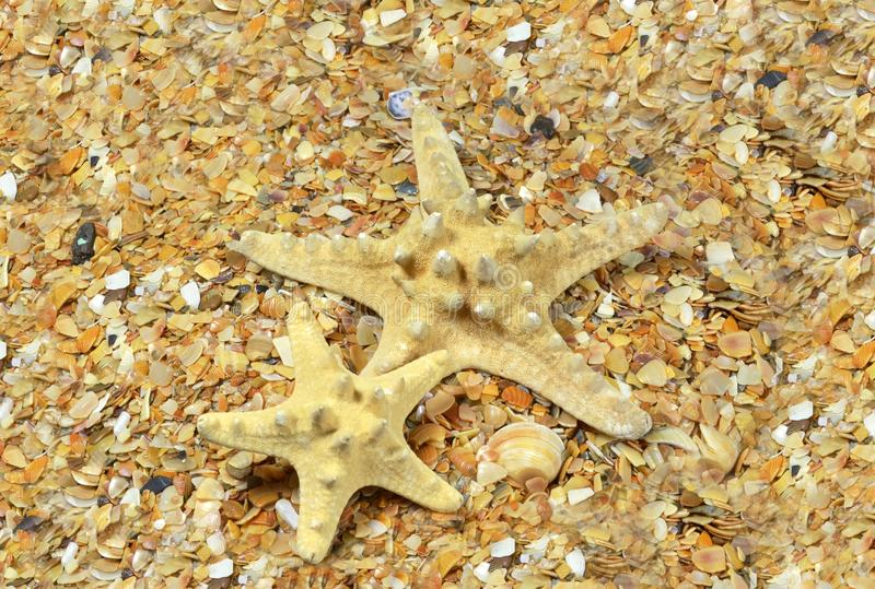 Two starfish on sea beach royalty free stock images