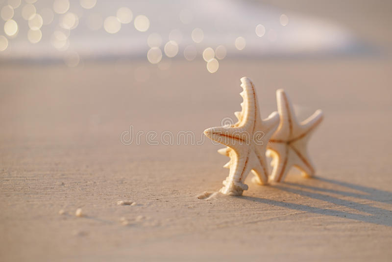 Two starfish on sea ocean beach in Florida, soft gentle sunrise stock photos