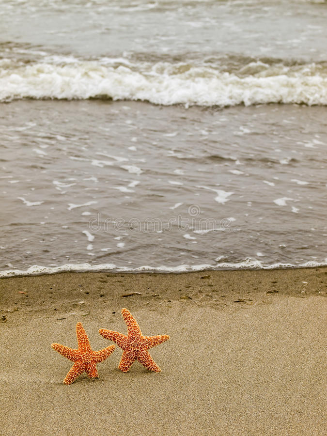 Download Two Starfish On The Shoreline Stock Photo - Image: 26408054