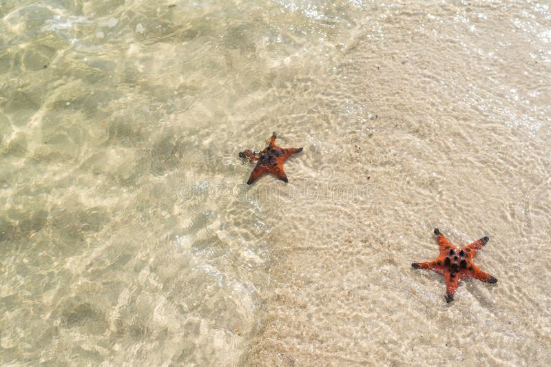 Two starfish on the summer beach in sea water stock photo