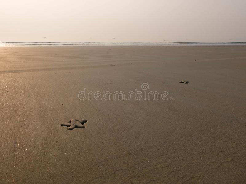 Two starfishes on the sand beach stock images
